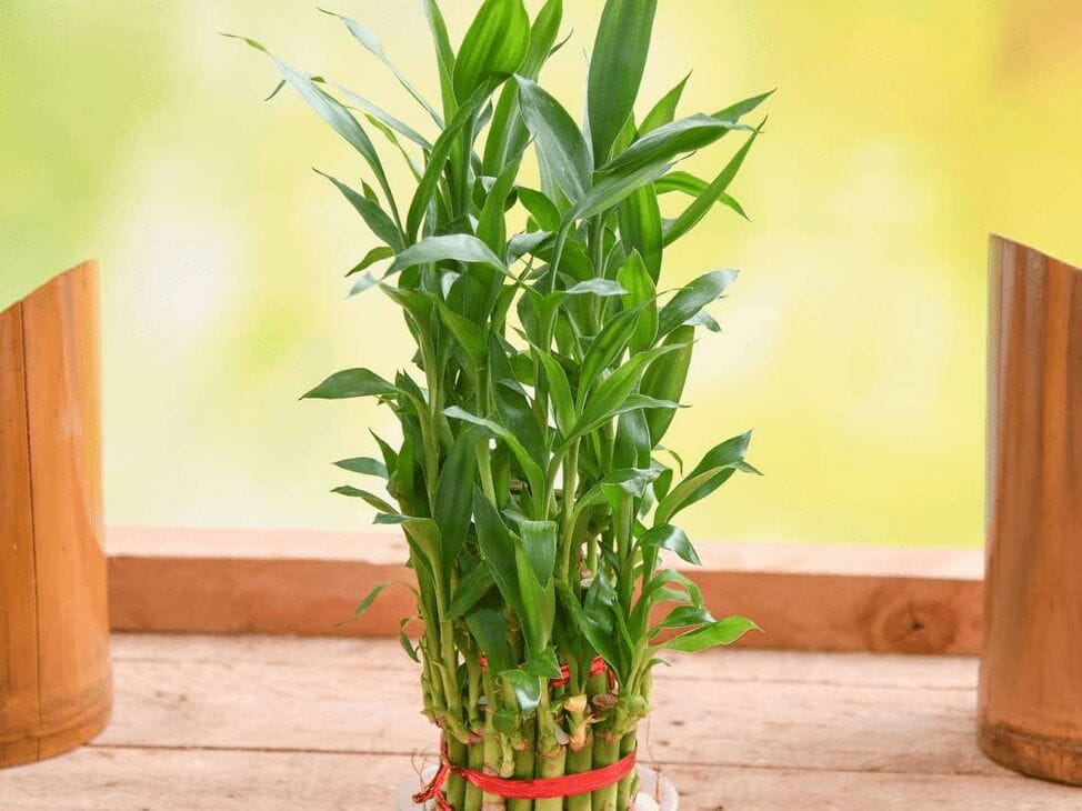 Best indoor plants for a positive household